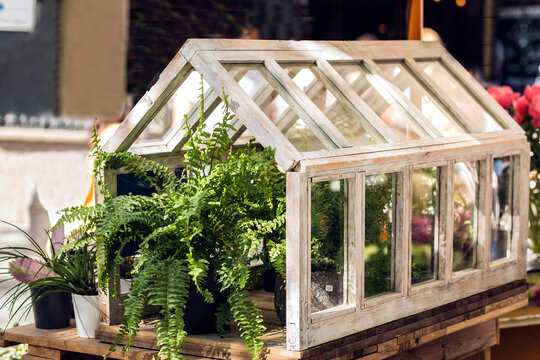 plants inside a small wood and glass greenhouse o protect them