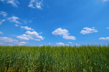 green rural scene