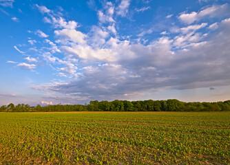 agriculture farm landscape