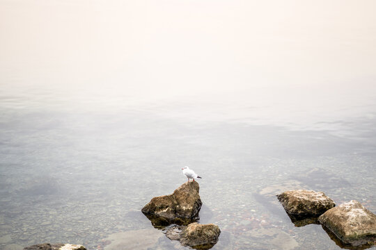 Seagull sits on coastal stones