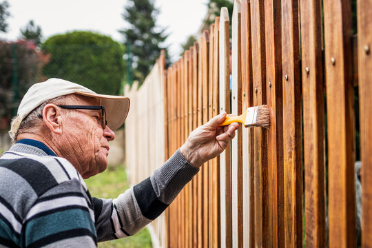 Active senior man painting wooden fence in garden. Old craftsman working at backyard. Repairing picket fence