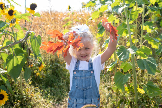 Cute little girl collecting leaves in autumn