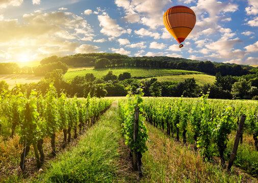 Hot air balloons over a vineyard at sunset, France