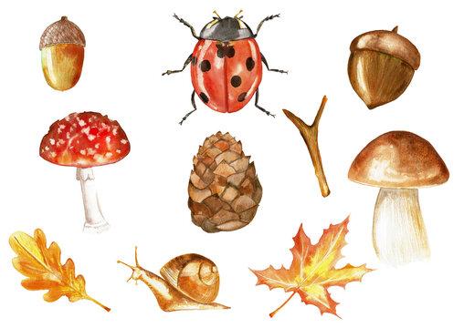 Set of watercolor hand drawn objects isolated on white background for pattern, invitation, postcard, textile, fabric. Acorn, lady bug, mushroom, pinecone, slug, leaf, stick