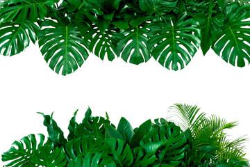 Fototapeta Tropical leaves foliage plant bush floral arrangement nature backdrop isolated on white background