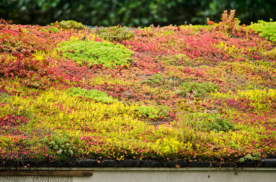 Vegetated sloping roof with sedum in vibrant yellow, red and green