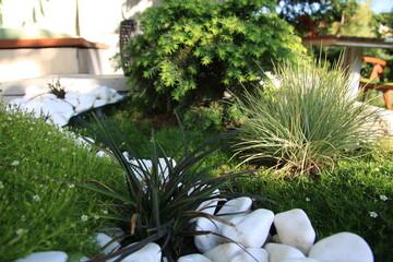 Fototapeta róża, rośliny, kwiat, ogród, ogrodnik, lato, słońce, pąki, płatki, kolor, różowy, uprawa, ziemia, przyroda teren zewnętrzny, pielęgnacja roślin, biały, żuczek, zielony,  obraz