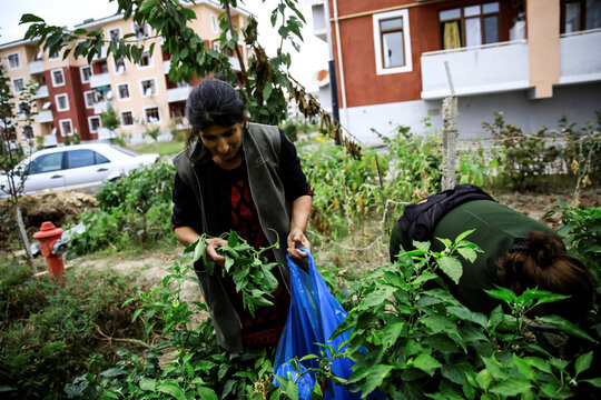 A woman picks up peppers from her garden as she returned to collect some belongings from her damaged home after a ceasefire began during the fighting over the breakaway region of Nagorno-Karabakh in the city of Terter