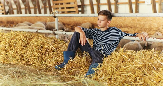 Caucasian small teen boy lying on hay in shed, resting and smiling to camera. Little teenager spending time at animals farm in village. Sheep flock on background in stable. Childhood in countryside.