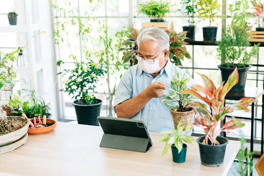 Asian retirement grandfather wearing a face mask and live to sell plants on a tablet. Enjoy taking care of plants. Retirement hobby and lifestyle. Grandfather work from home. Concept of quarantine.