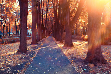 Photo sur Plexiglas Dinosaurs path autumn park / autumn landscape, yellow park in autumn trees and leaves, a beautiful sunny day in the city park. the fall