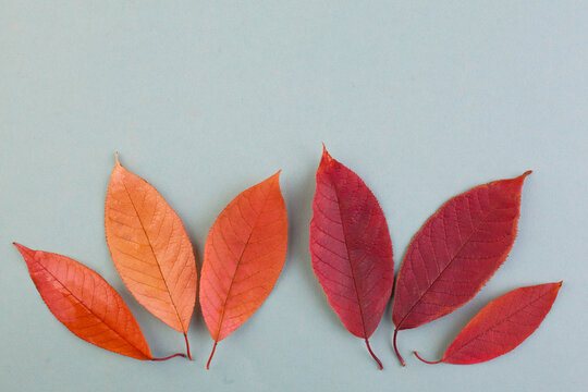 Autumn background composition with red and orange fall leaves on blue background