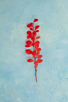 Autumn minimal card. Fall background composition with red autumnal leaves on blue plaster stucco texture