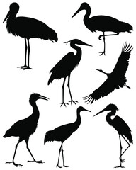 Collection silhouettes of birds. Set of black isolated silhouettes of birds. Set of stork. Vector illustration.