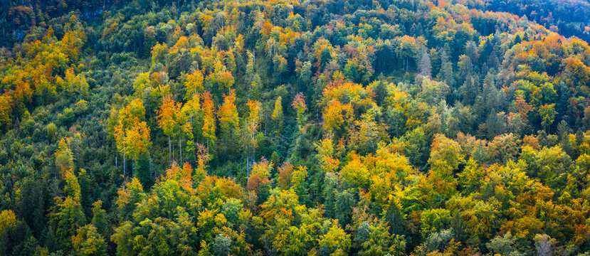 Autumn forest.Natural background. Panorama.
