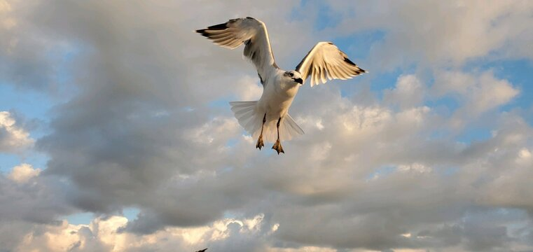 A seagull in flight over the beach at Wildwood Crest New Jersey