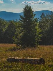 Krajobraz górskiej polany