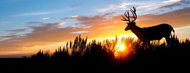 A male (buck) mule deer against an evening sunset.