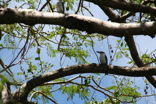 Tree branches with a bird perched on one branch