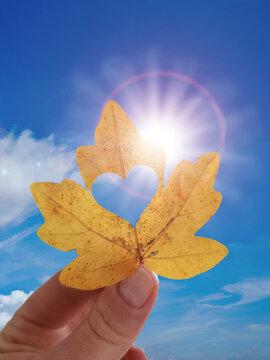 Herbstblatt vor blauem Himmel und Sonnenschein