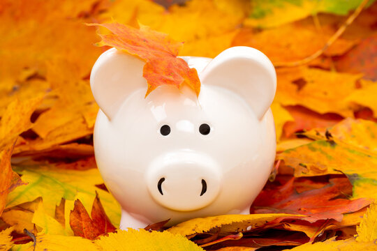 Piggy bank with colorful autumn foliage