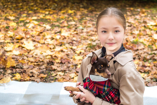 teenage girl is holding a toy terrier dog in her arms in the foliage of fall yellow leaves. Autumn concept