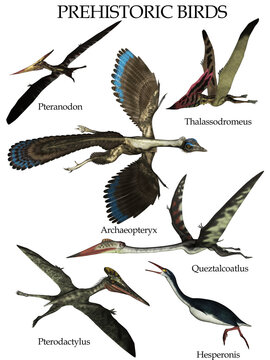 Set of prehistoric birds isolated in white background - 3D render