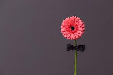 pink gerbera flower with a bow tie on the stem