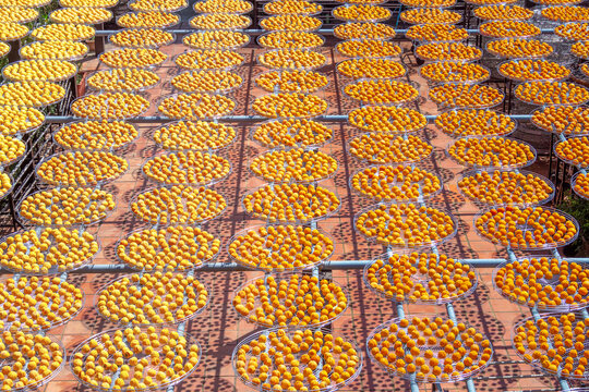 Areal view of the sun persimmons, the traditional way to dry fruit in Taiwan.
