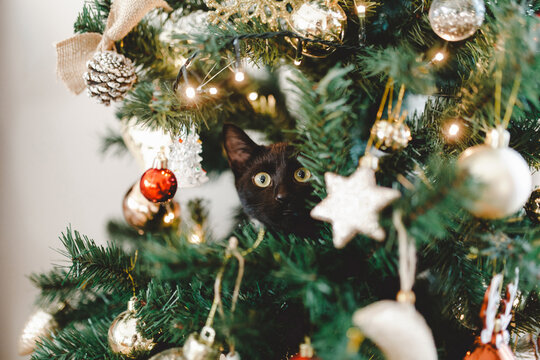 Black cat hiding in Christmas tree