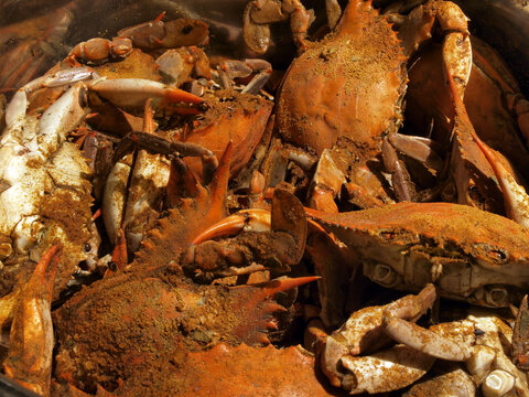 MD blue crabs in pot - cooked