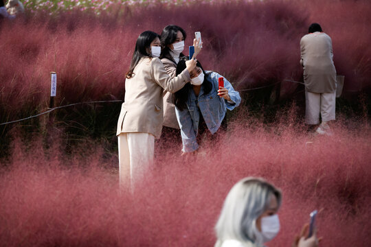 Women take a photograph of a pink muhly grass field amid the coronavirus disease (COVID-19) pandemic at a park in Hanam