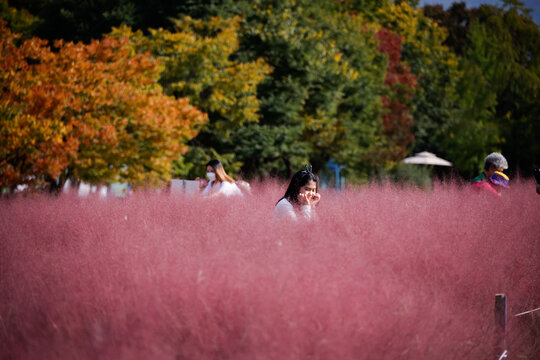 A woman poses for a photograph in a pink muhly grass field in Hanam