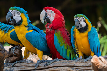 beautiful macaw parrots