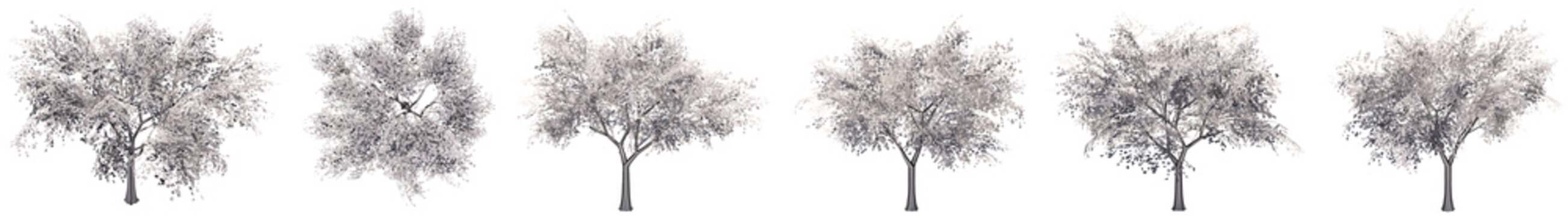 Set or collection of drawings of Tilia trees isolated on white background . Concept or conceptual 3d illustration for nature, ecology and conservation, strength and endurance, force and life