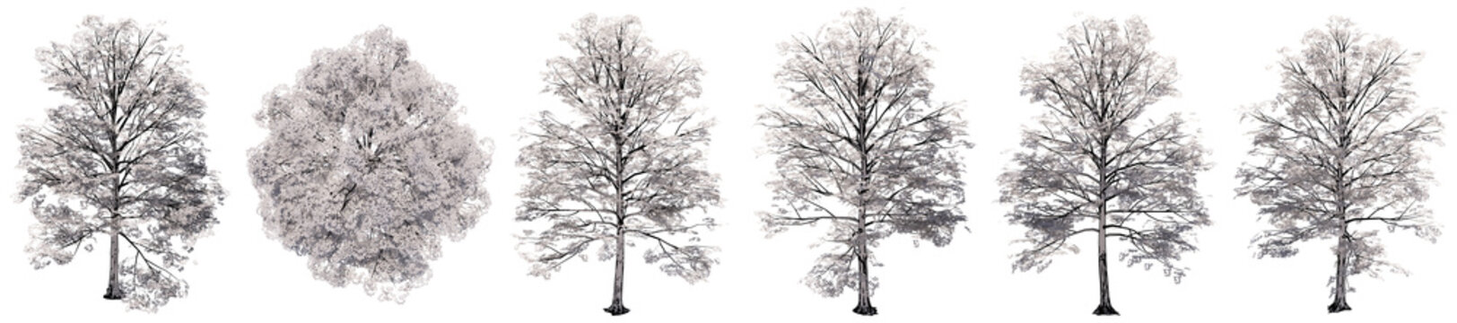 Set or collection of drawings of Elm trees isolated on white background . Concept or conceptual 3d illustration for nature, ecology and conservation, strength and endurance, force and life