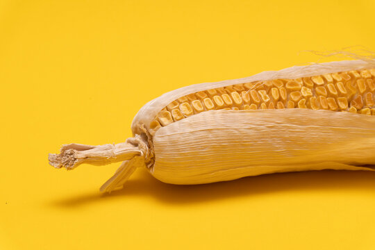 Botton part of moldy dried corn on yellow background, copy space, not eatable, waste food