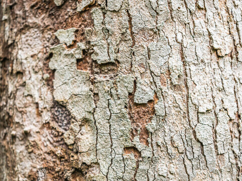 Abstract nature background of rough, cracked, barked texture and pattern of tree.