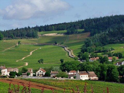Paysage viticole en Bourgogne.