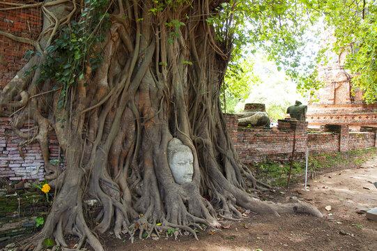 アユタヤ遺跡のワット・マハタートにある 奇跡の仏頭