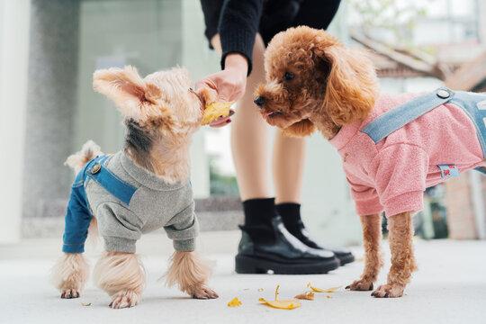 pet dog outdoor in city