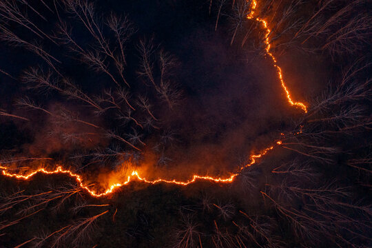 Burning fire in forest at night