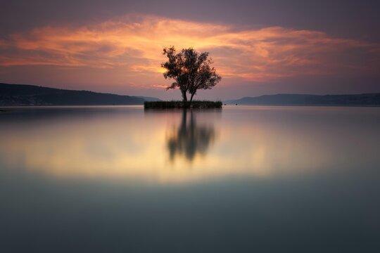 Tree, evening mood, Lake Constance near Dingelsdorf, view towards Ueberlinger See lake, Baden-Wuerttemberg, Germany, Europe