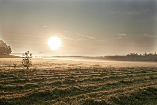 Freshly mowed lawn and a wheat field in the morning, Leutstetten, Starnberg, Upper Bavaria, Bavaria, Germany, Europe