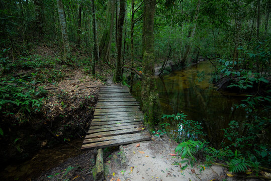 Green forest woodland nature and walkway lane path forest trees background - Dark Forest with old wooden bridge