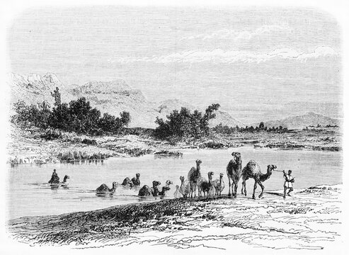 African landscape with camels crossing and going off Atbarah river, Sudan, Nile tributary. Ancient grey tone etching style art by Girardet, Le Tour du Monde, Paris, 1861