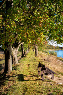Spaziergang am Rheindamm