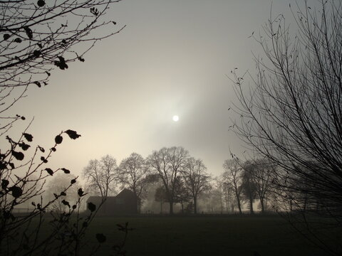 Silhouette of trees in the evening. An atmospheric landscape. On a foggy winter evening you can only see the contours of a barn and some trees in sepia tone.