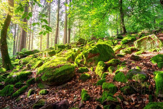 Moos im Wald, Wanderung in der Natur