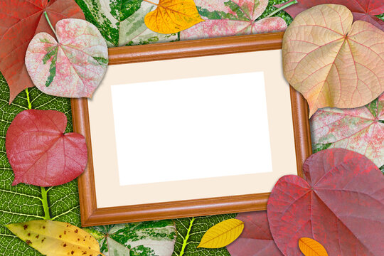 Wooden photo frame on colorful foliage leaves.